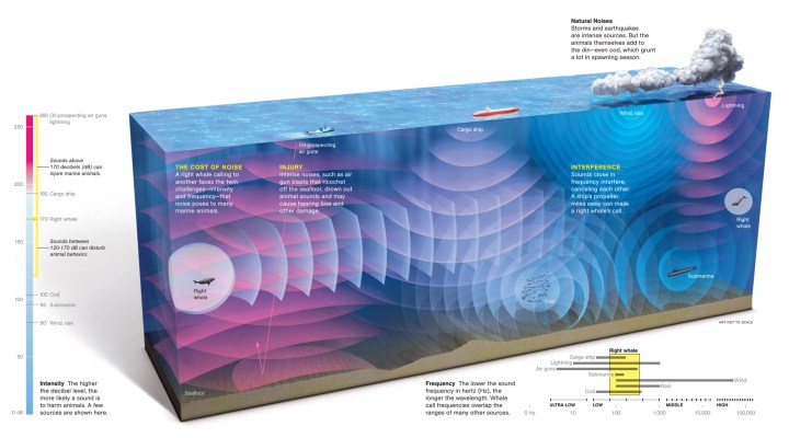 The ocean is just one ecosystem where it's noisier now than it's ever been. Illustration by Stefan Fichtel, National Geographic