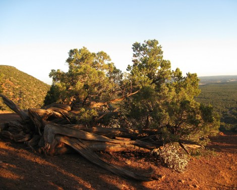 Bears Ears are buttes in southeastern Utah. Photograph by brewbooks, courtesy Flickr. CC-BY-SA-2.0