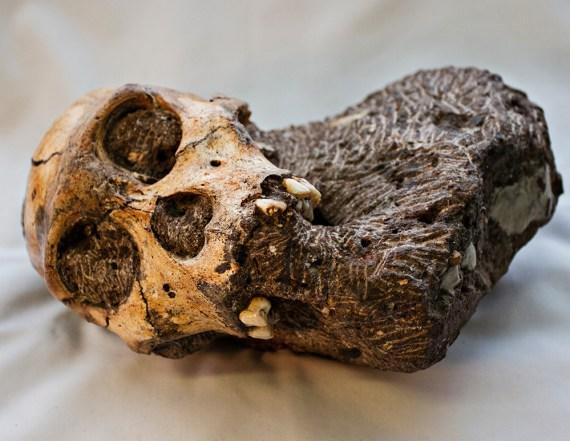 WitsLab2013-6207 Karabo Skull