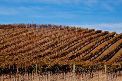vineyard-in-sonoma-1660176_640