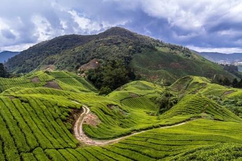 malaysia-1536865_640