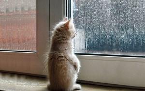 Revenez plus tard, ou restez pour le chat.
