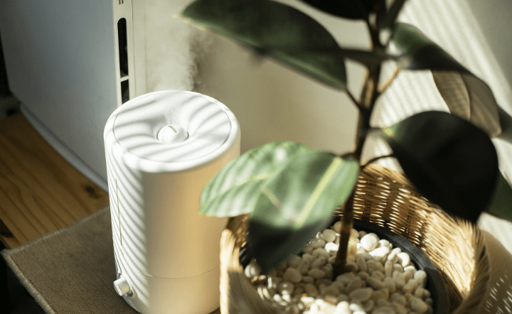 Close up of dehumidifier and plant