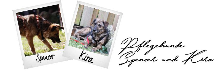 Unsere beiden neuen Pflegehunde – Spencer und Kira