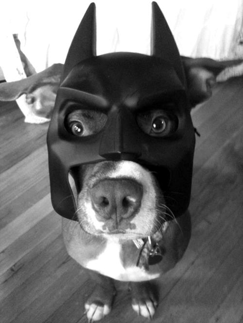 1. Intenta disfrazar a tu perro