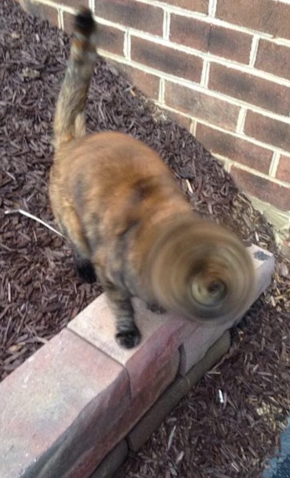 9. El gato se convirtió en un tornado.