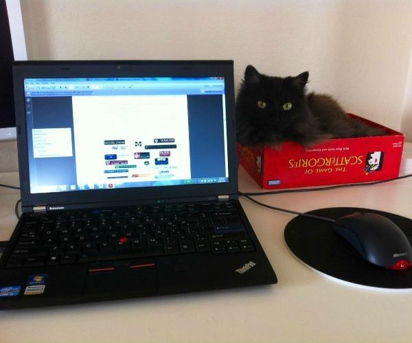 4. ¿Estás cansado de que tu gato se acueste en el teclado de tu notebook? Poné una caja al lado, las cajas son totalmente irresistibles para ellos.