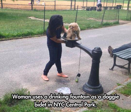 3. Una mujer usando la fuente de la plaza como bidet para su perrito.