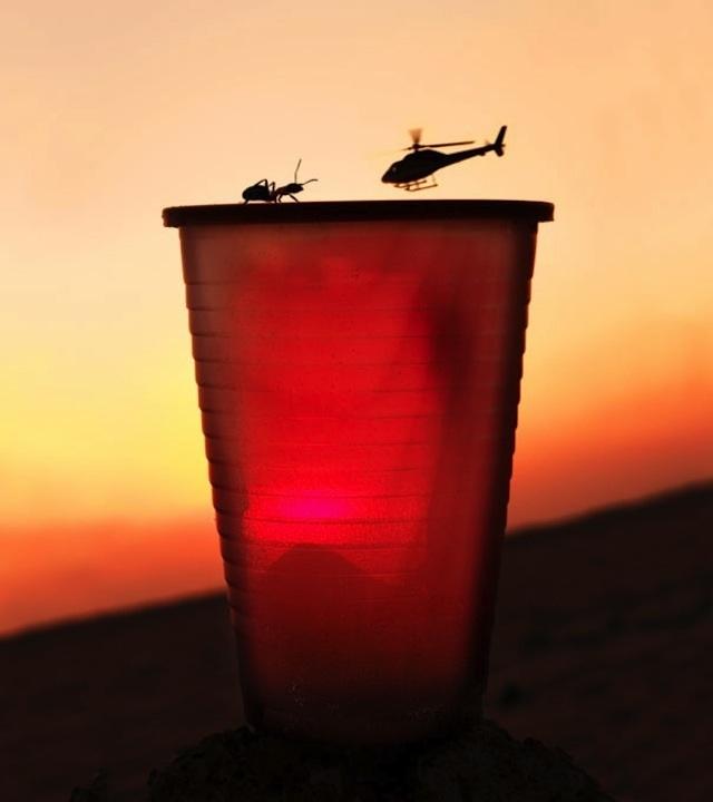 17. No, no es un helicóptero amenazando a una hormiga.