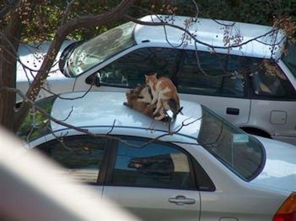 13. Ni los gatos respetan las cosas ya