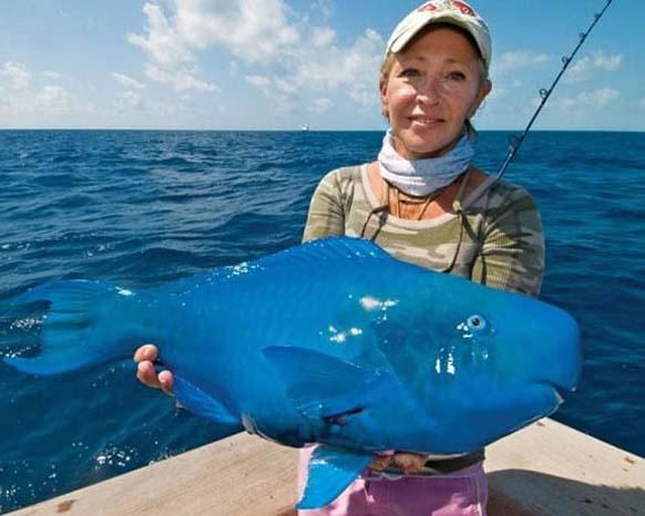 5. Pez loro azul: puede alcanzar hasta 1,2 metros de largo.