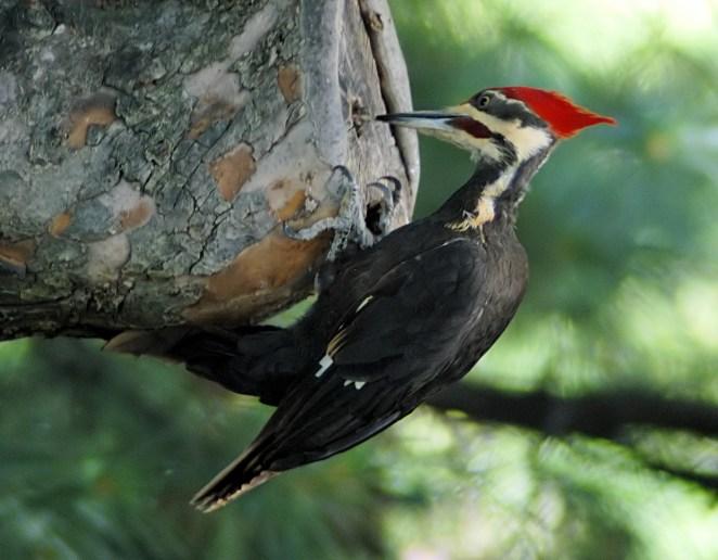 4. ¿Por qué los pájaros carpinteros no sufren dolor de cabeza?