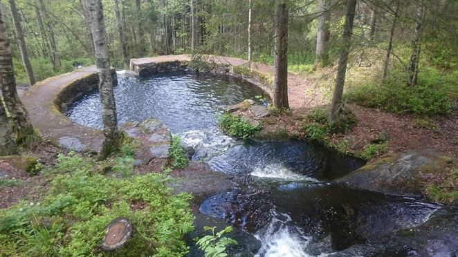 Natural Swimming Pool In The Forest