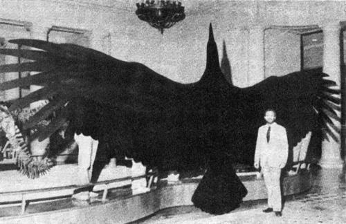 16. El ave voladora más grande del mundo fue la gigantesca Argentavis Magnificem que habitó en Argentina hace unos 6 millones de años. Era un buitre de una envergadura de 7 metros o más, con un peso aprox. de 120 kg.