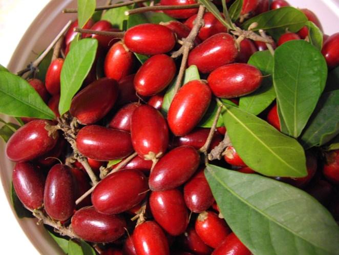 25. Fruta milagrosa