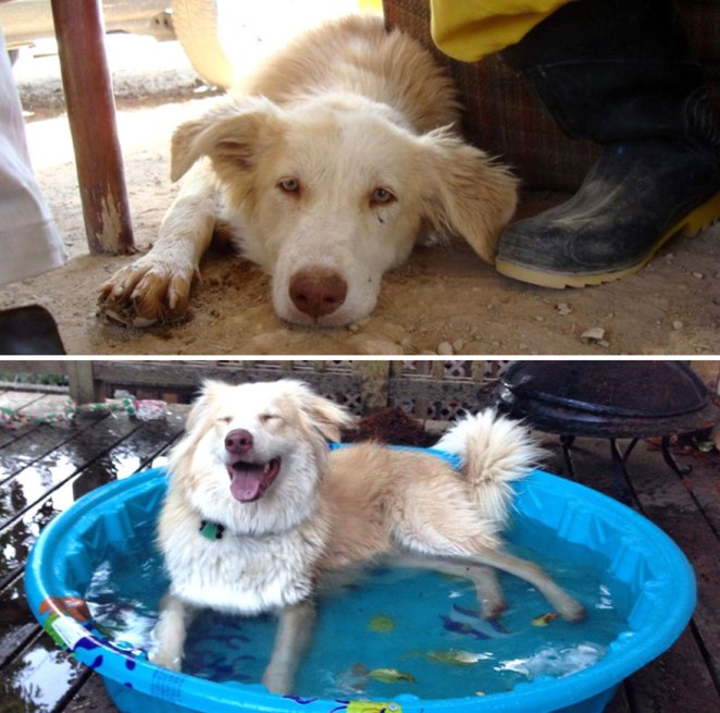 Ripley At Around 6 Months In Iran And Again At Around 1 Year In Her Forever Home In The United States