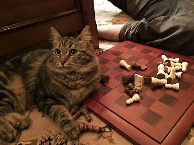 Think You Can Play Chess Around Her? Think Again. She Always Wins