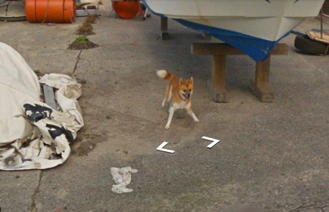 tiny-dog-follows-street-view-car-kagoshima-japan003