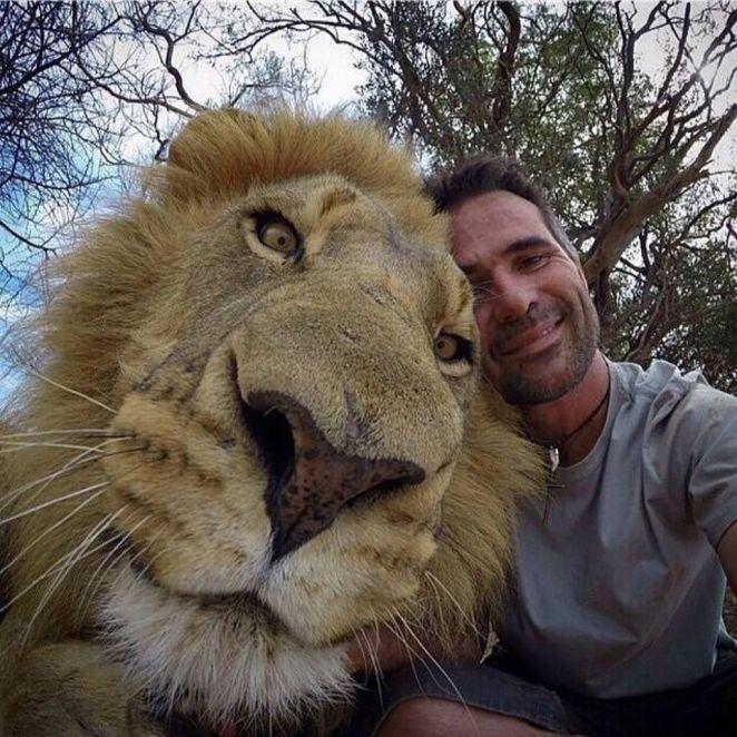 Resultado de imagen para big cat selfie