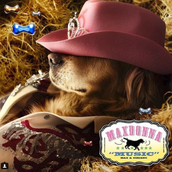 Resultado de imagen para madonna instagram maxdonna dog