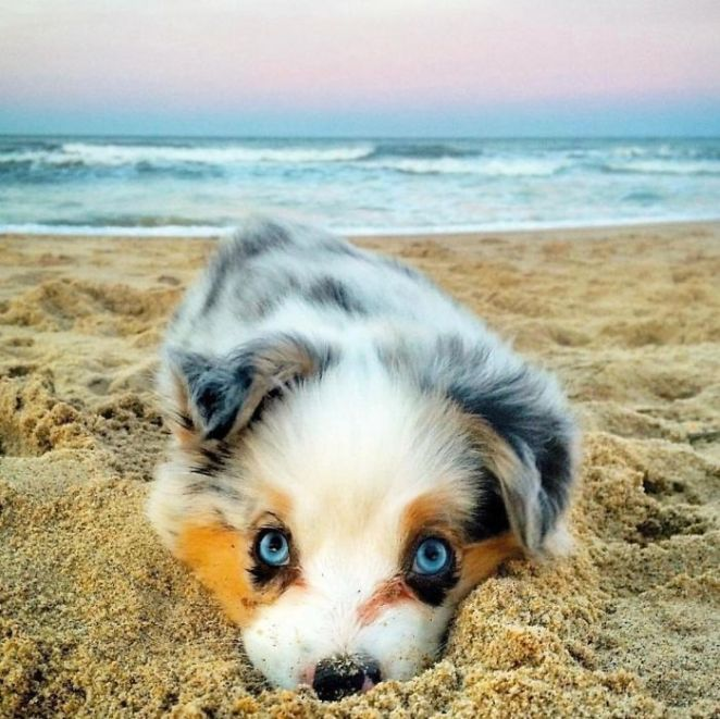 Cutest Beach Bum