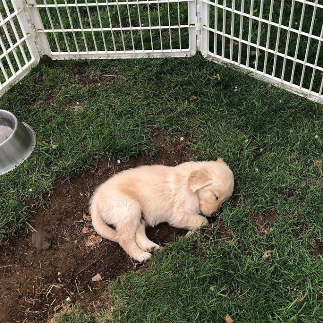 All Tuckered Out From Digging