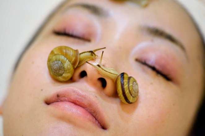 Resultado de imagen para snail facial