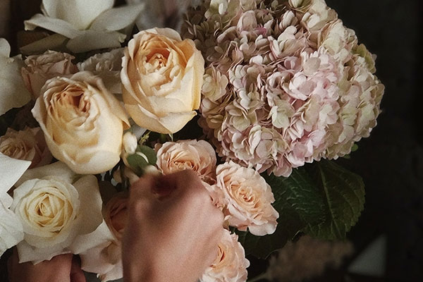 Tips for taking care of your garden roses