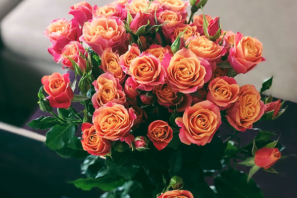 Choose the perfect flower for any occasion - Enjoy Flowers