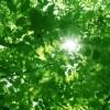 サイキック能力を開きませんか? 12/16(土) サイキック養成講座 初級
