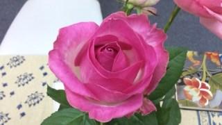 【ご感想】薔薇の魔法・ヒールバランシング