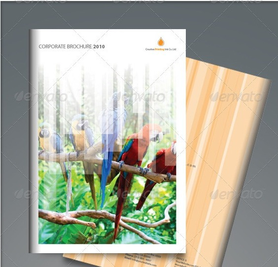 corporate-brochure-birds1