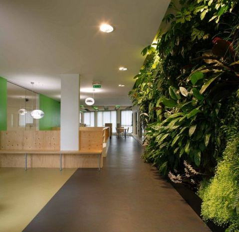 Green Office Design Using Natural Materials