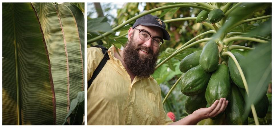 summer vacation denver colorado botanical gardens papaya plant