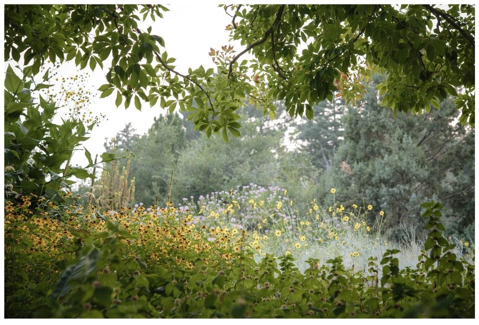 summer vacation denver colorado denver botanic gardens wildflowers