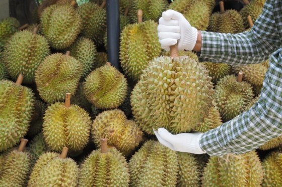 10 Heavenly Durians You Need To Try