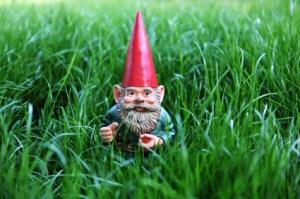 Skrzat w trawie