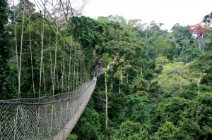 Kakum National Park's famous canopy walkway  Copyright Chiappi Nicola Jan. 2007