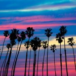 Palm trees against sunset in California