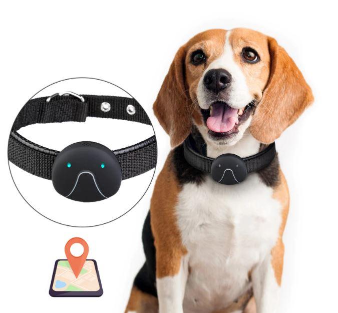 GPS Tracker for dogs   A Blog by Susan Bulanda
