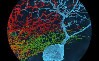 ganglion style neuron eyewire, 3D neuron, hd neuron, neurons, eyewire, neuroscience, BRAIN initiative