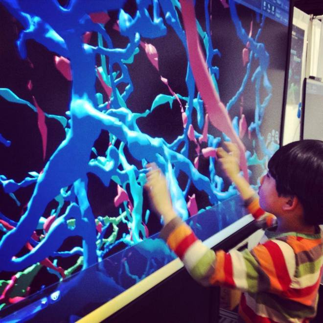 5 year old plays with neurons, eyewire, science festival, US Science and Engineering Festival,