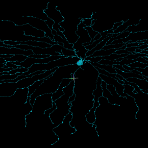 eyewire neurons, 3d neurons, neuron, neuroscience, neuron image, brain, seung lab, eyewire, citizen science, citizen neuroscience