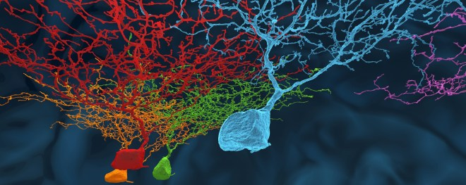EyeWire Neurons HD
