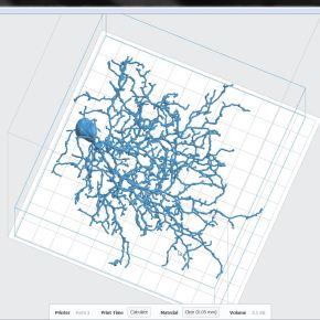 3D printing neurons