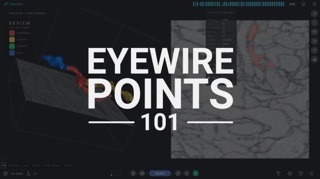 eyewire points 101, points, eyewire