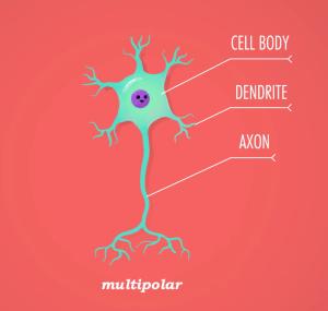 neuron by crash course, neuron