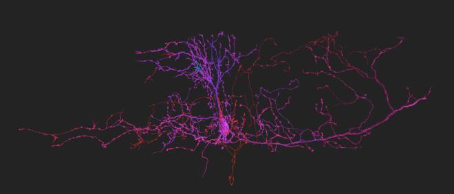 zebrafish, neuron, eyewire, mystic, neuroscience, brain, eyewire news, science