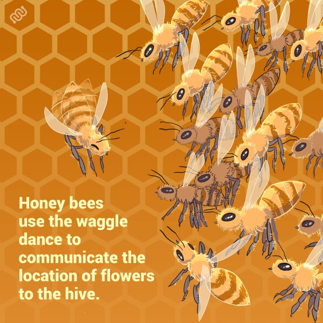 Lionize, eyewire, citizen science, Happy Hour, zoo brains, brain zoo, brain, neuroscience, cit sci, research, trivia, power hour, zoo, brain facts, honey bee, bees, waggle dance, bee brains, social bees, social honey bees, healthy bees, pollinators