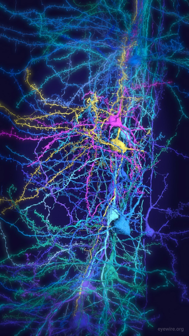 neuron, neurons, iphone wallpaper, neuroscience, amy sterling, cortex, science, 3D neuron, cortical column, pyramidal neuron, pyramidal, dendrites, spiny dendrites